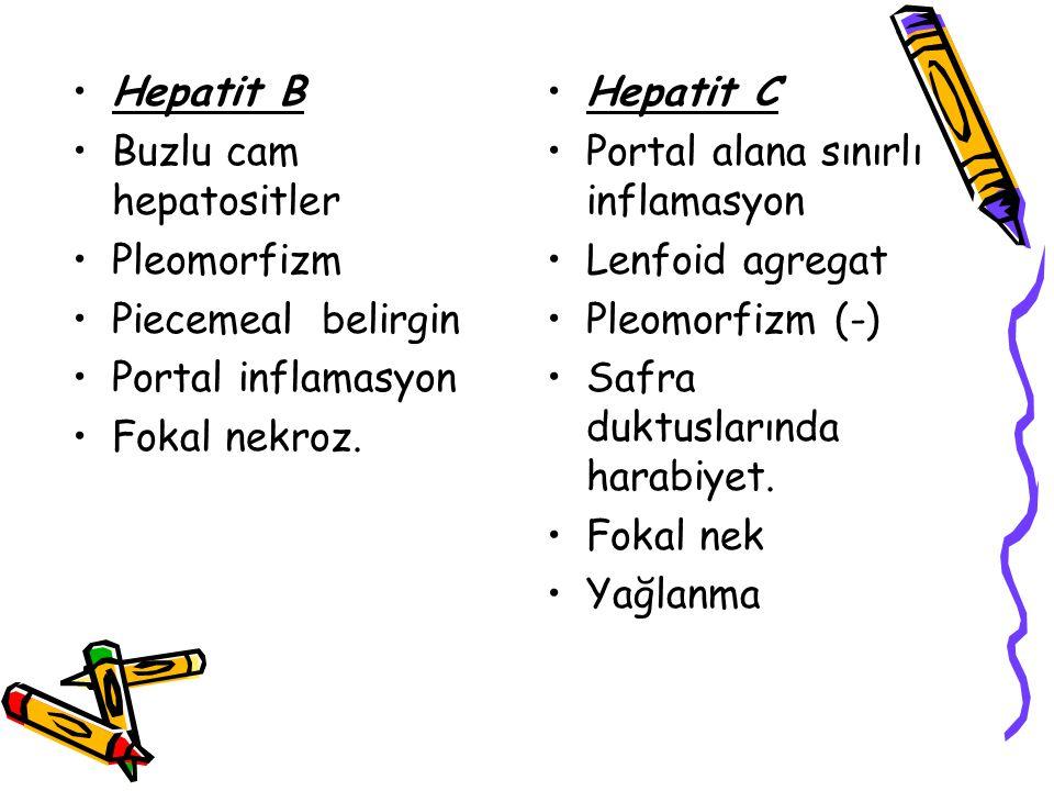 Hepatit B Buzlu cam hepatositler. Pleomorfizm. Piecemeal belirgin. Portal inflamasyon. Fokal nekroz.