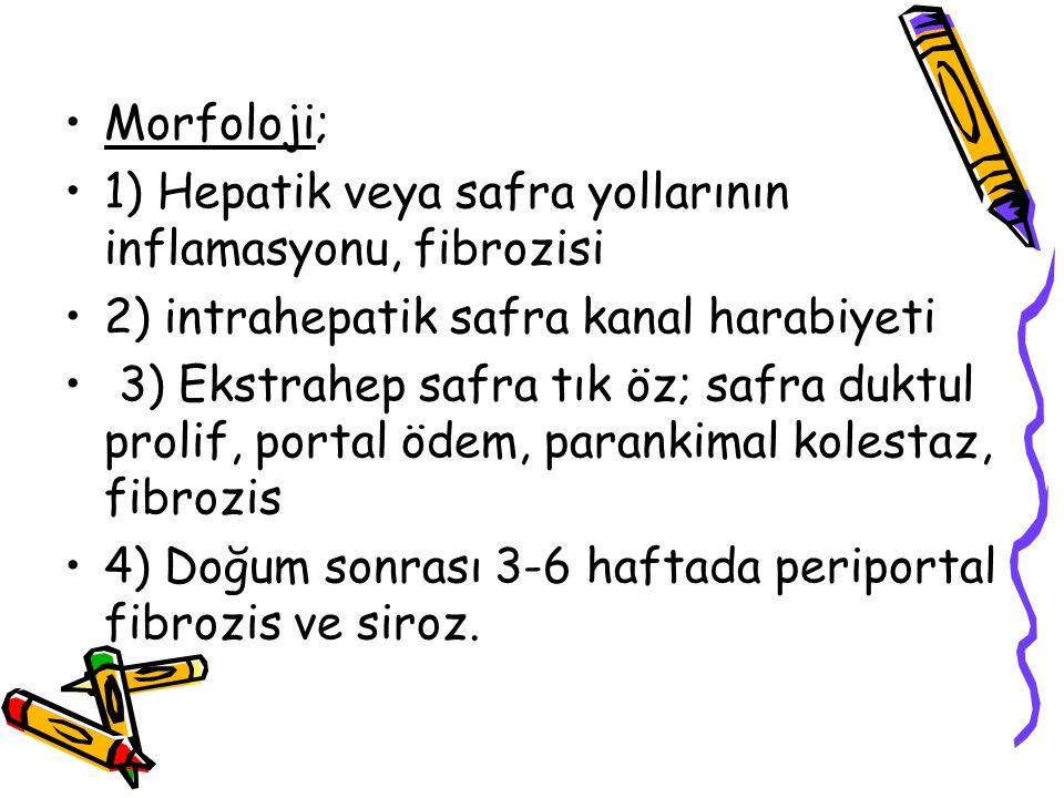 Morfoloji; 1) Hepatik veya safra yollarının inflamasyonu, fibrozisi. 2) intrahepatik safra kanal harabiyeti.