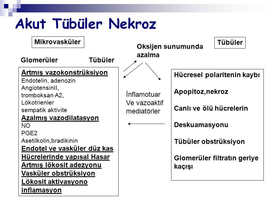 Akut Tübüler Nekroz Mikrovasküler Tübüler Oksijen sunumunda azalma