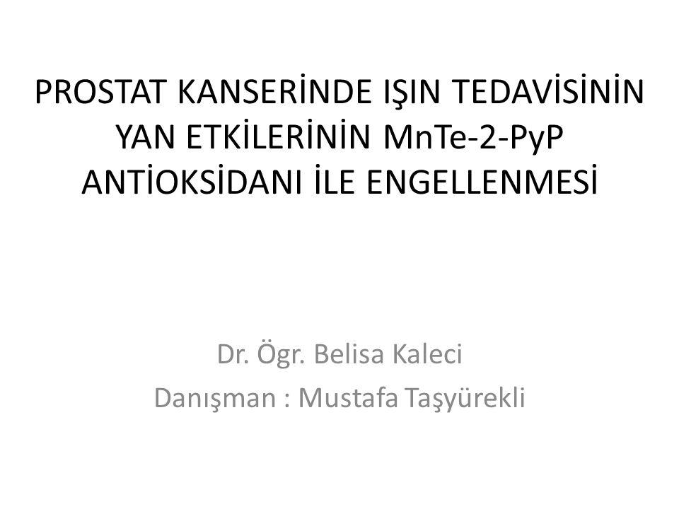 Dr. Ögr. Belisa Kaleci Danışman : Mustafa Taşyürekli