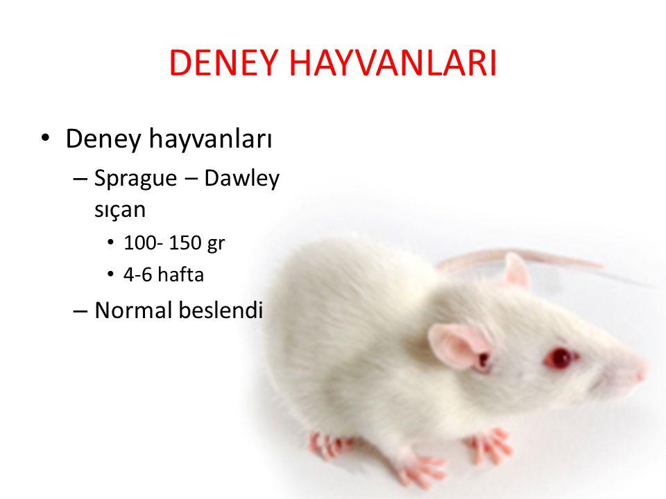 DENEY HAYVANLARI Deney hayvanları Sprague – Dawley sıçan