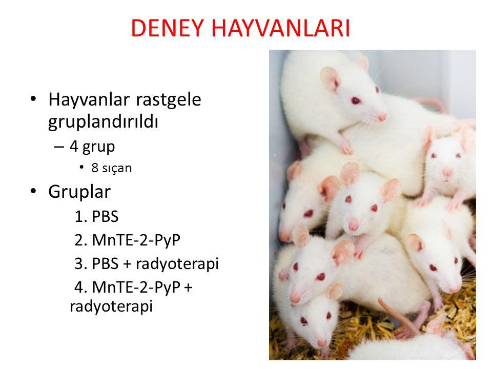 DENEY HAYVANLARI Hayvanlar rastgele gruplandırıldı Gruplar 4 grup