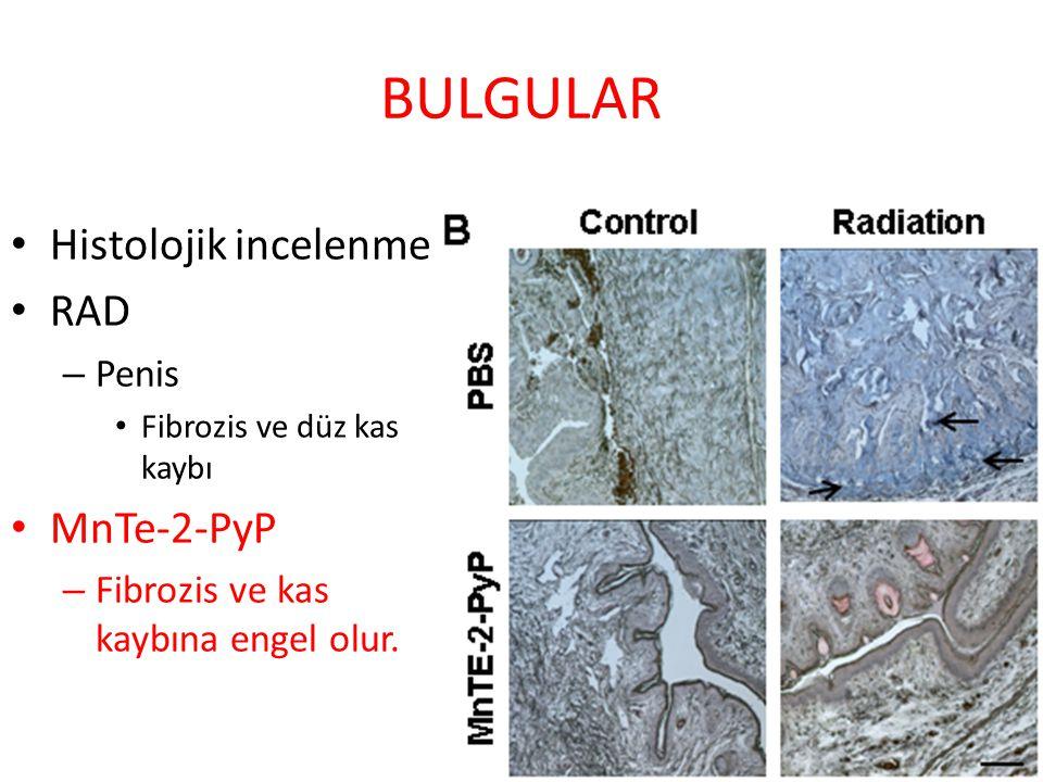 BULGULAR Histolojik incelenme RAD MnTe-2-PyP Penis