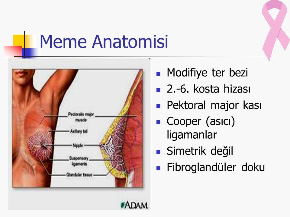 Meme Anatomisi Modifiye ter bezi 2.-6. kosta hizası