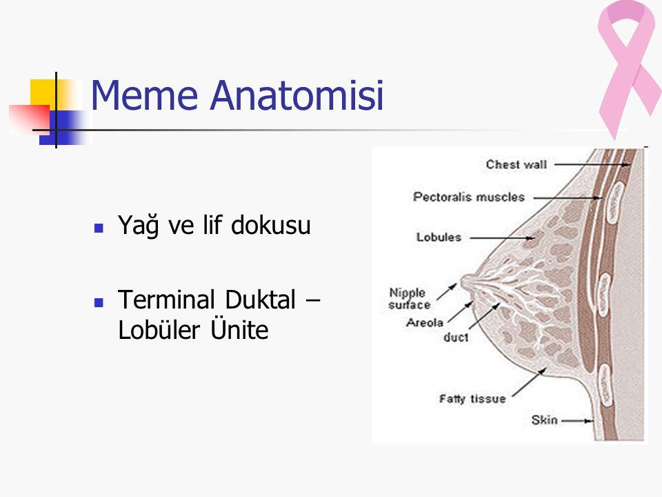Meme Anatomisi Yağ ve lif dokusu Terminal Duktal – Lobüler Ünite