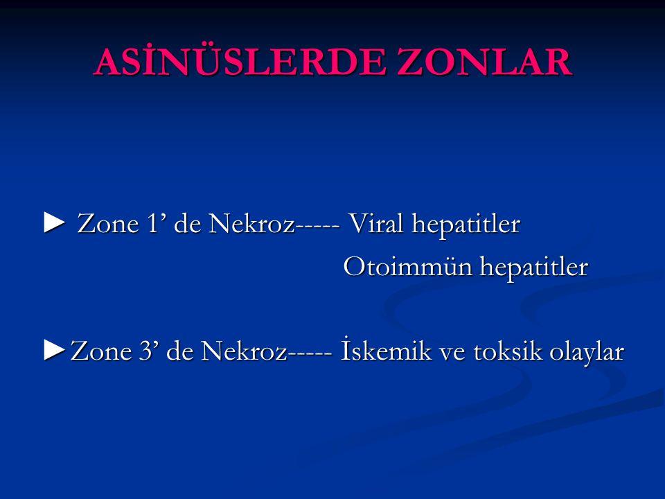 ASİNÜSLERDE ZONLAR ► Zone 1' de Nekroz----- Viral hepatitler