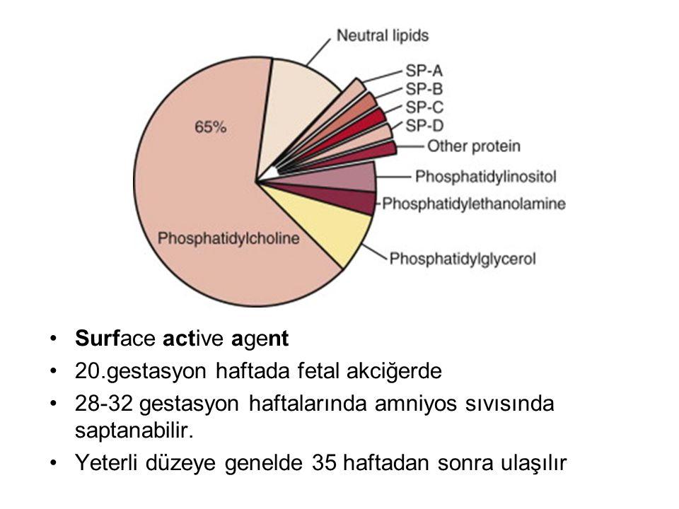 Surface active agent 20.gestasyon haftada fetal akciğerde. 28-32 gestasyon haftalarında amniyos sıvısında saptanabilir.