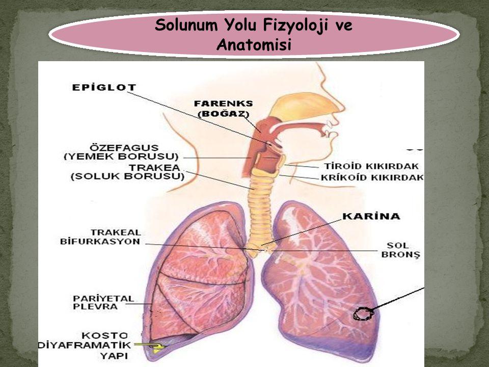 Solunum Yolu Fizyoloji ve Anatomisi
