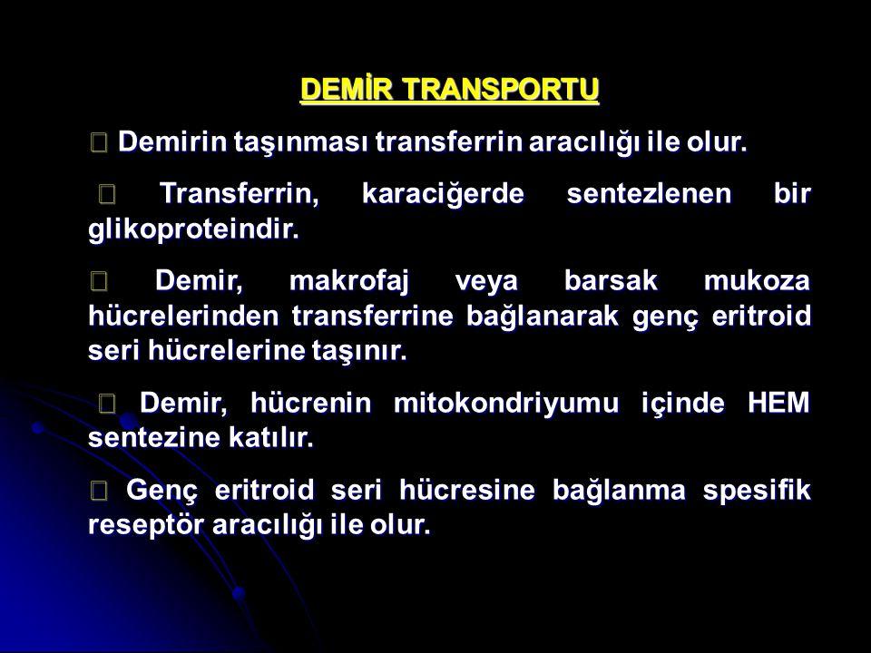 DEMİR TRANSPORTU ◆ Demirin taşınması transferrin aracılığı ile olur. ◆ Transferrin, karaciğerde sentezlenen bir glikoproteindir.