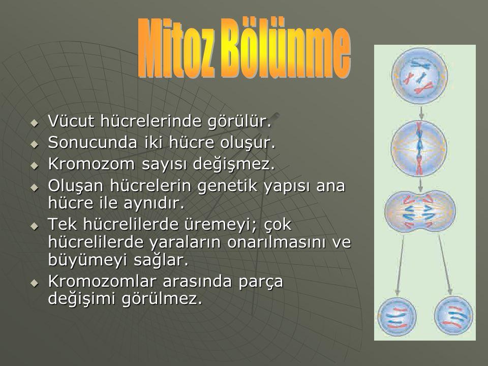 Mitoz Bölünme Vücut hücrelerinde görülür. Sonucunda iki hücre oluşur.