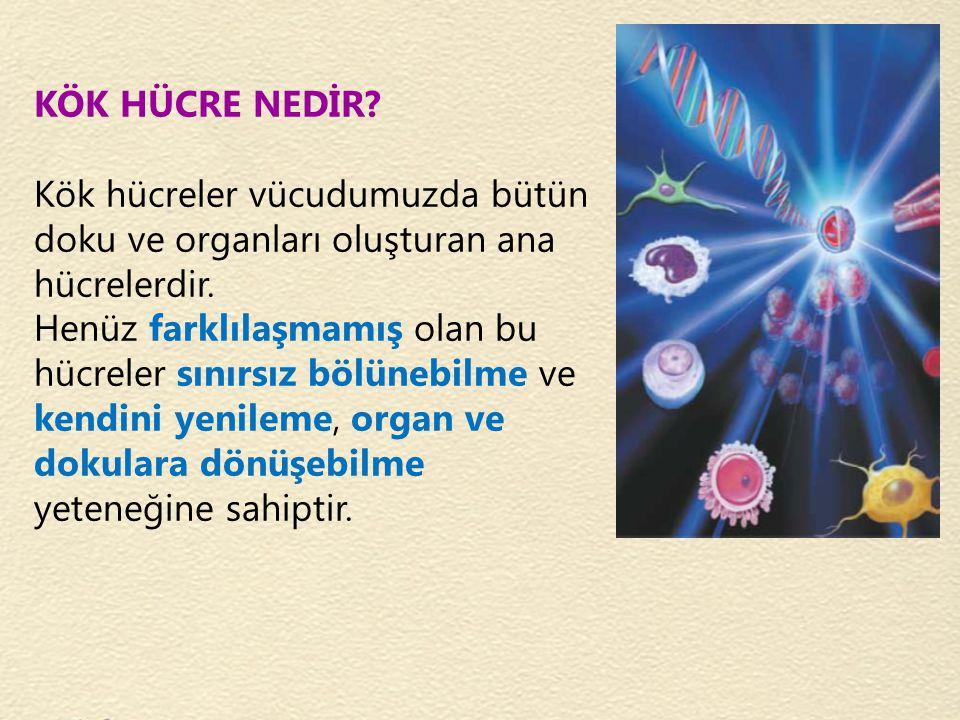 KÖK HÜCRE NEDİR Kök hücreler vücudumuzda bütün. doku ve organları oluşturan ana. hücrelerdir. Henüz farklılaşmamış olan bu.
