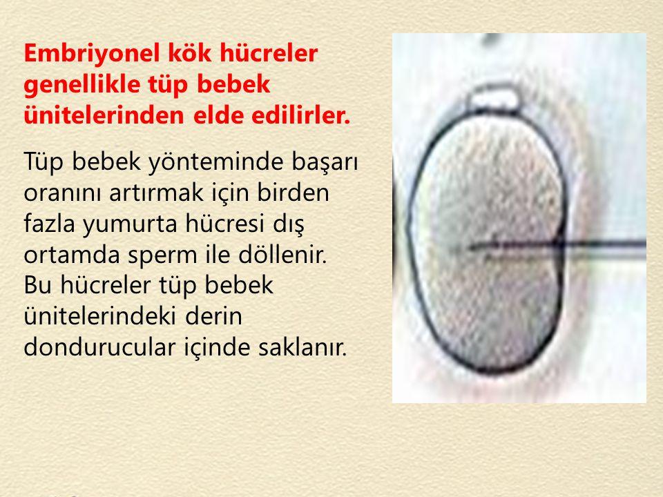 Embriyonel kök hücreler genellikle tüp bebek ünitelerinden elde edilirler.