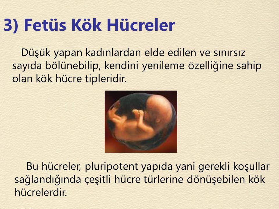 3) Fetüs Kök Hücreler