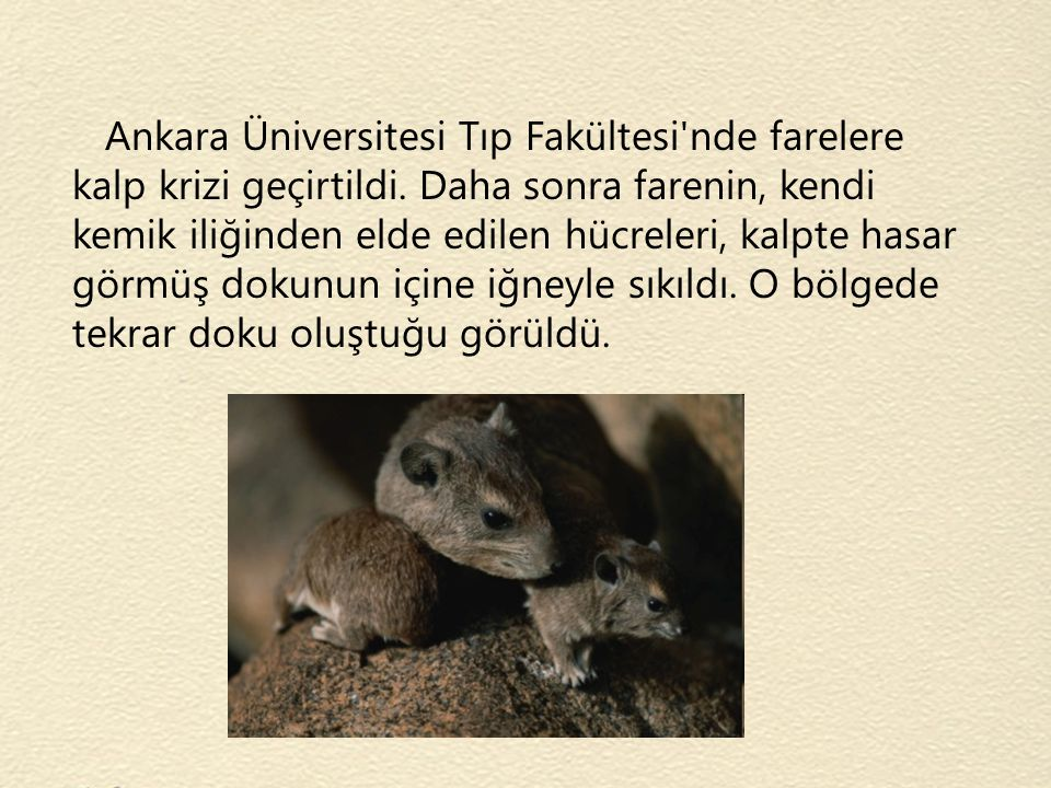 Ankara Üniversitesi Tıp Fakültesi nde farelere kalp krizi geçirtildi