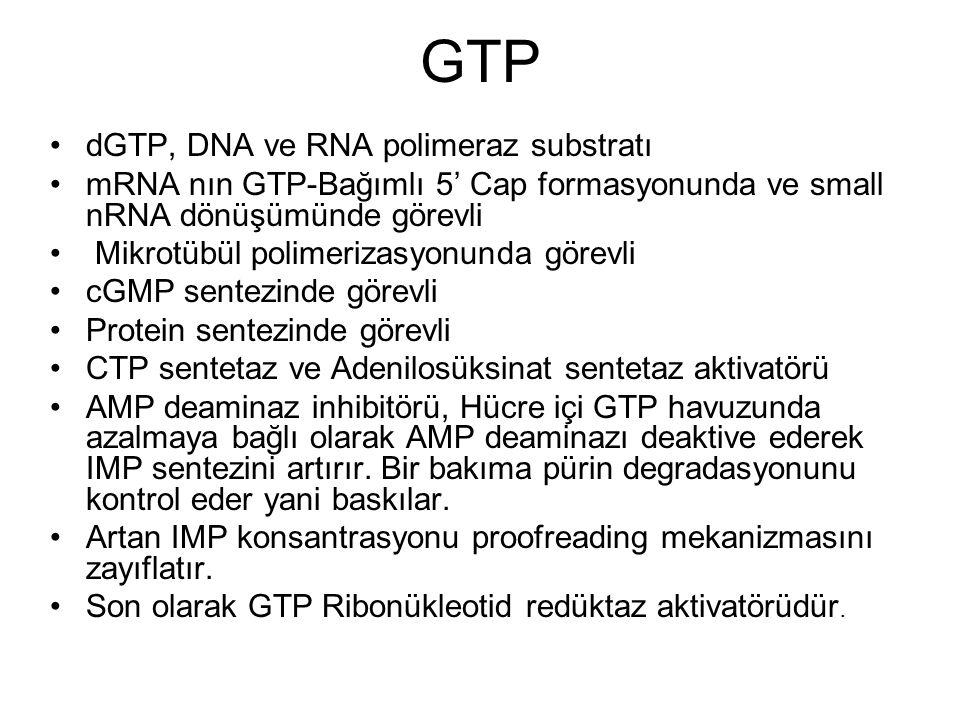 GTP dGTP, DNA ve RNA polimeraz substratı