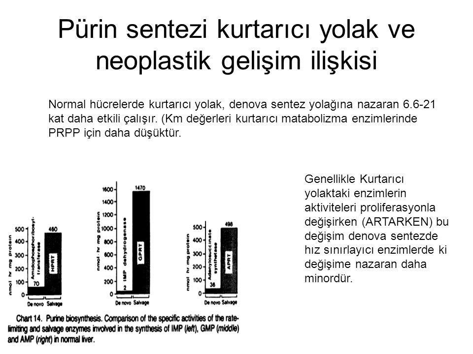 Pürin sentezi kurtarıcı yolak ve neoplastik gelişim ilişkisi