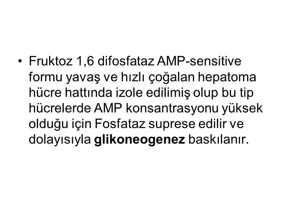 Fruktoz 1,6 difosfataz AMP-sensitive formu yavaş ve hızlı çoğalan hepatoma hücre hattında izole edilimiş olup bu tip hücrelerde AMP konsantrasyonu yüksek olduğu için Fosfataz suprese edilir ve dolayısıyla glikoneogenez baskılanır.