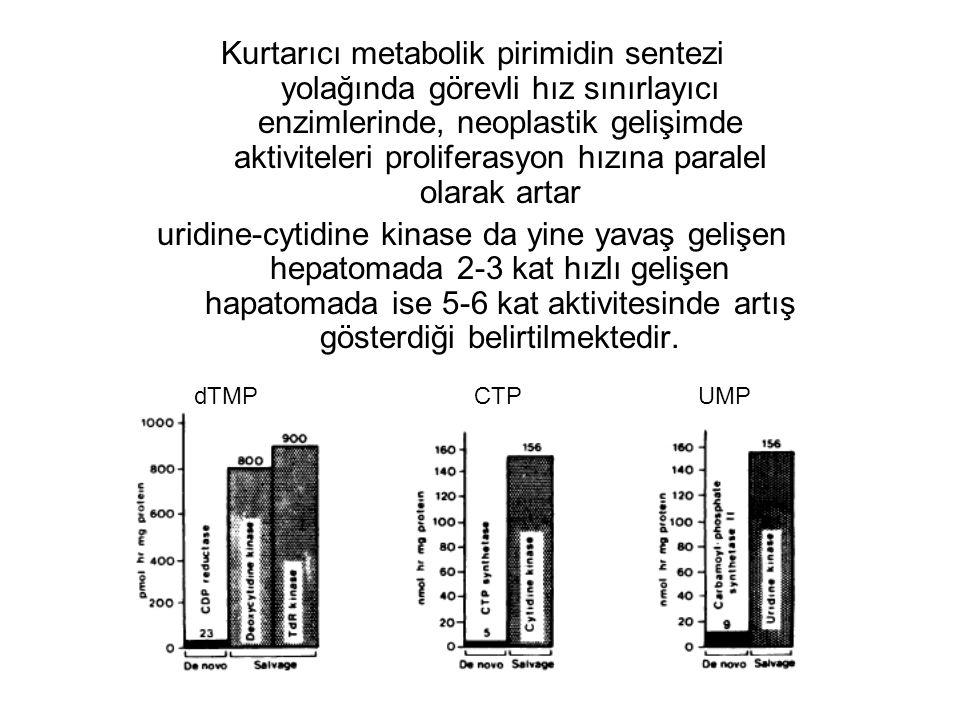 Kurtarıcı metabolik pirimidin sentezi yolağında görevli hız sınırlayıcı enzimlerinde, neoplastik gelişimde aktiviteleri proliferasyon hızına paralel olarak artar