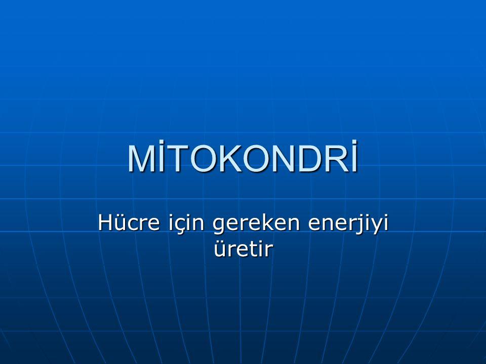 Hücre için gereken enerjiyi üretir