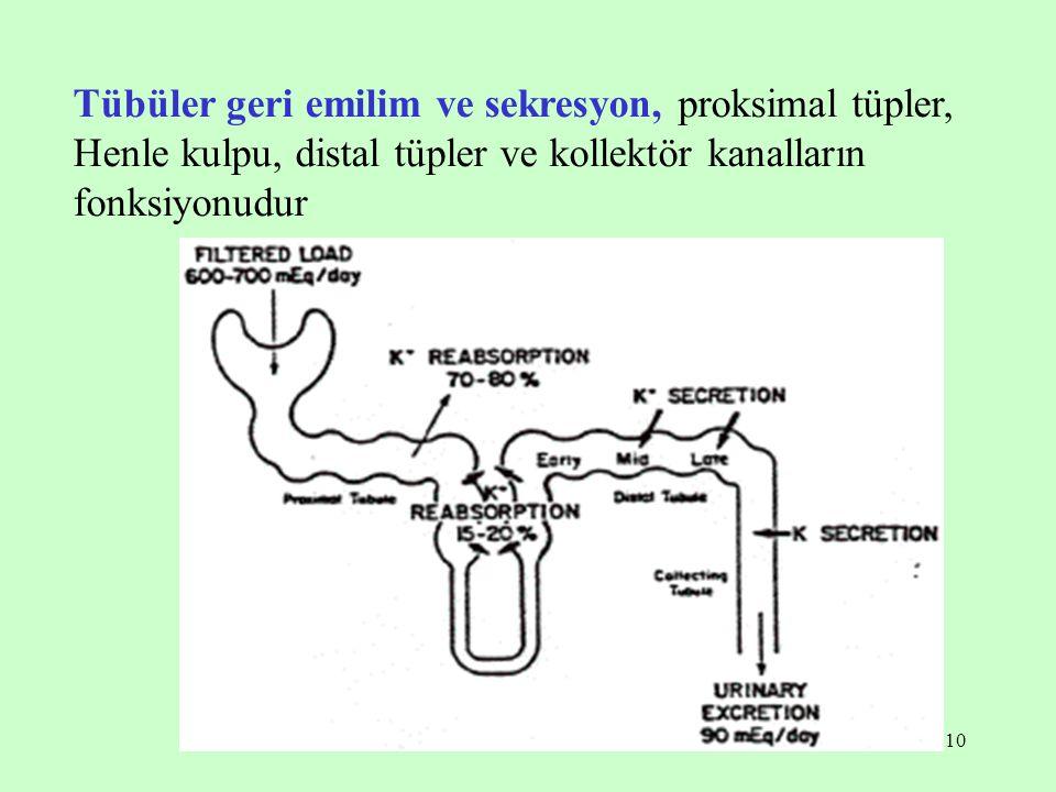 Tübüler geri emilim ve sekresyon, proksimal tüpler, Henle kulpu, distal tüpler ve kollektör kanalların fonksiyonudur