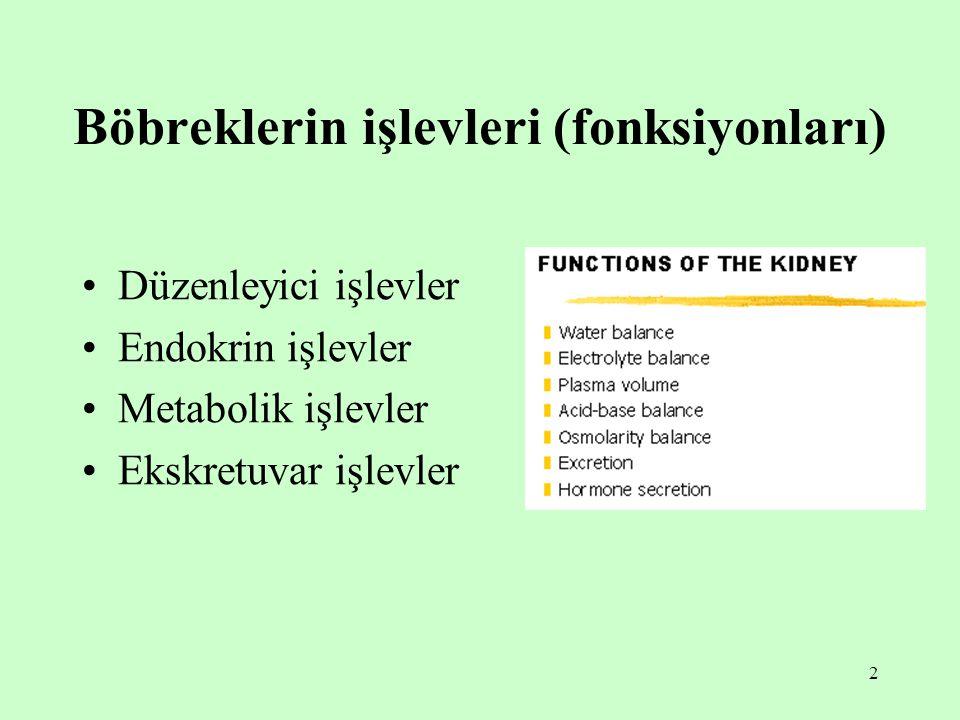 Böbreklerin işlevleri (fonksiyonları)