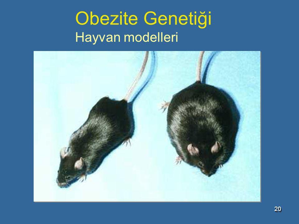 Obezite Genetiği Hayvan modelleri