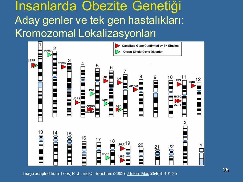 İnsanlarda Obezite Genetiği Aday genler ve tek gen hastalıkları: Kromozomal Lokalizasyonları