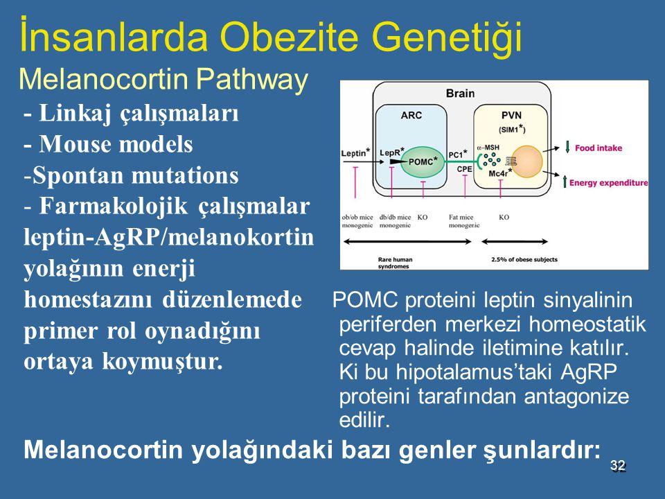 İnsanlarda Obezite Genetiği Melanocortin Pathway