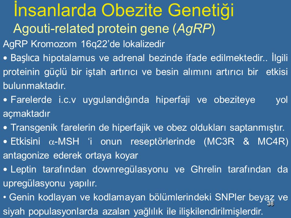 İnsanlarda Obezite Genetiği Agouti-related protein gene (AgRP)
