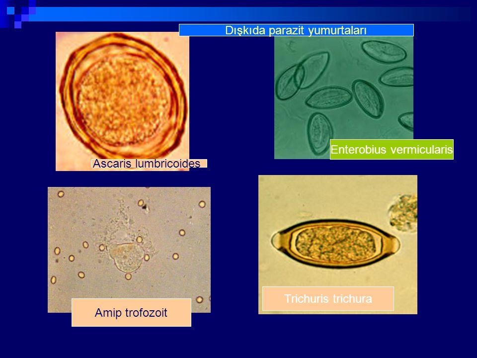 Dışkıda parazit yumurtaları