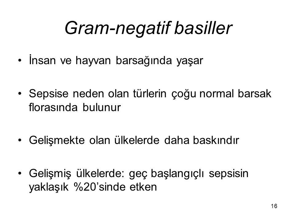 Gram-negatif basiller