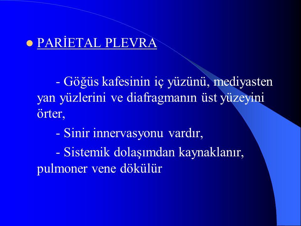 PARİETAL PLEVRA - Göğüs kafesinin iç yüzünü, mediyasten yan yüzlerini ve diafragmanın üst yüzeyini örter,