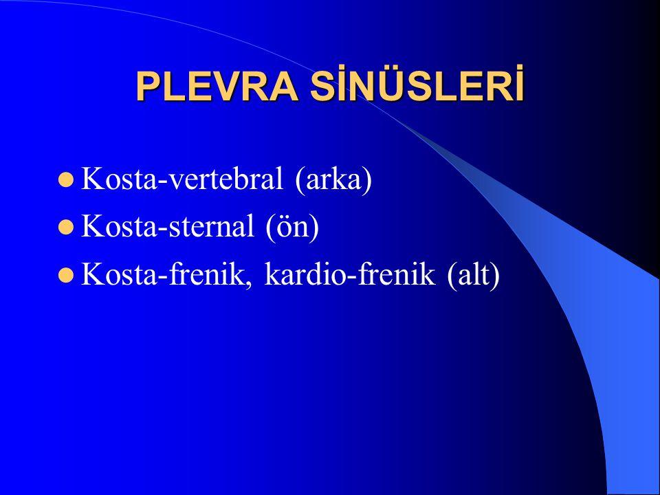 PLEVRA SİNÜSLERİ Kosta-vertebral (arka) Kosta-sternal (ön)
