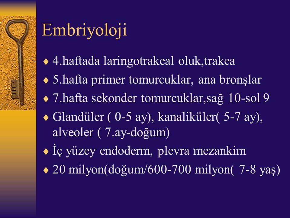 Embriyoloji 4.haftada laringotrakeal oluk,trakea