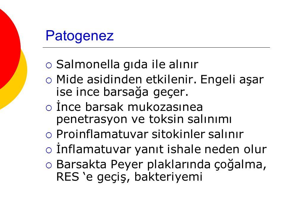 Patogenez Salmonella gıda ile alınır