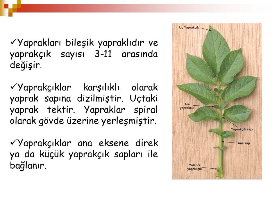 Yaprakları bileşik yapraklıdır ve yaprakçık sayısı 3-11 arasında değişir.