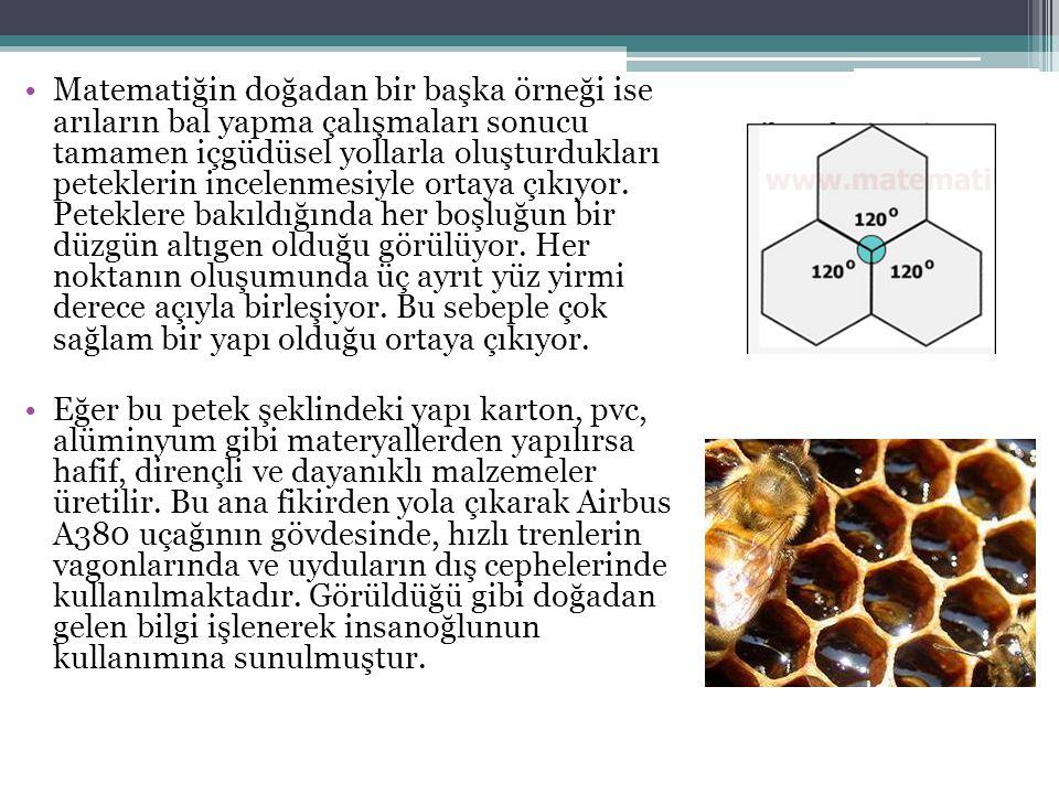 Matematiğin doğadan bir başka örneği ise arıların bal yapma çalışmaları sonucu tamamen içgüdüsel yollarla oluşturdukları peteklerin incelenmesiyle ortaya çıkıyor. Peteklere bakıldığında her boşluğun bir düzgün altıgen olduğu görülüyor. Her noktanın oluşumunda üç ayrıt yüz yirmi derece açıyla birleşiyor. Bu sebeple çok sağlam bir yapı olduğu ortaya çıkıyor.