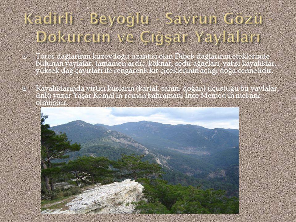 Kadirli - Beyoğlu - Savrun Gözü - Dokurcun ve Çığşar Yaylaları