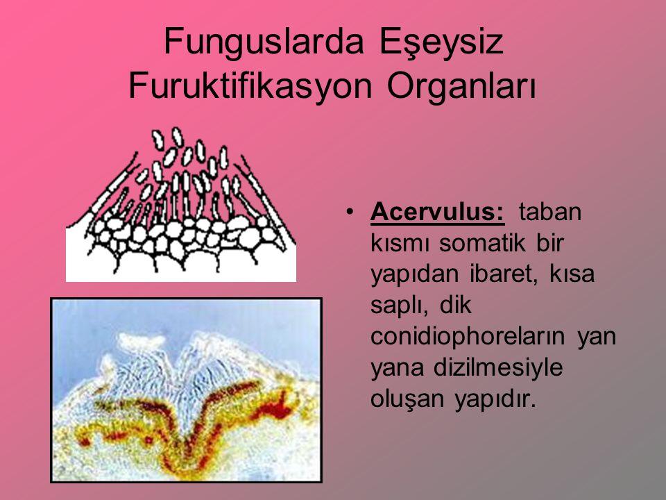 Funguslarda Eşeysiz Furuktifikasyon Organları