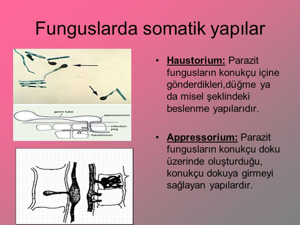 Funguslarda somatik yapılar