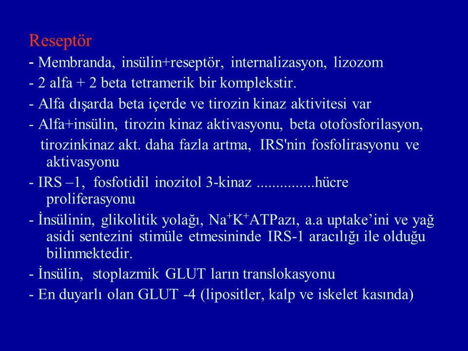 Reseptör - Membranda, insülin+reseptör, internalizasyon, lizozom