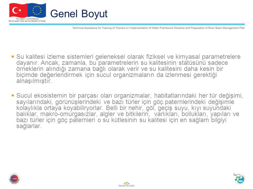 Genel Boyut