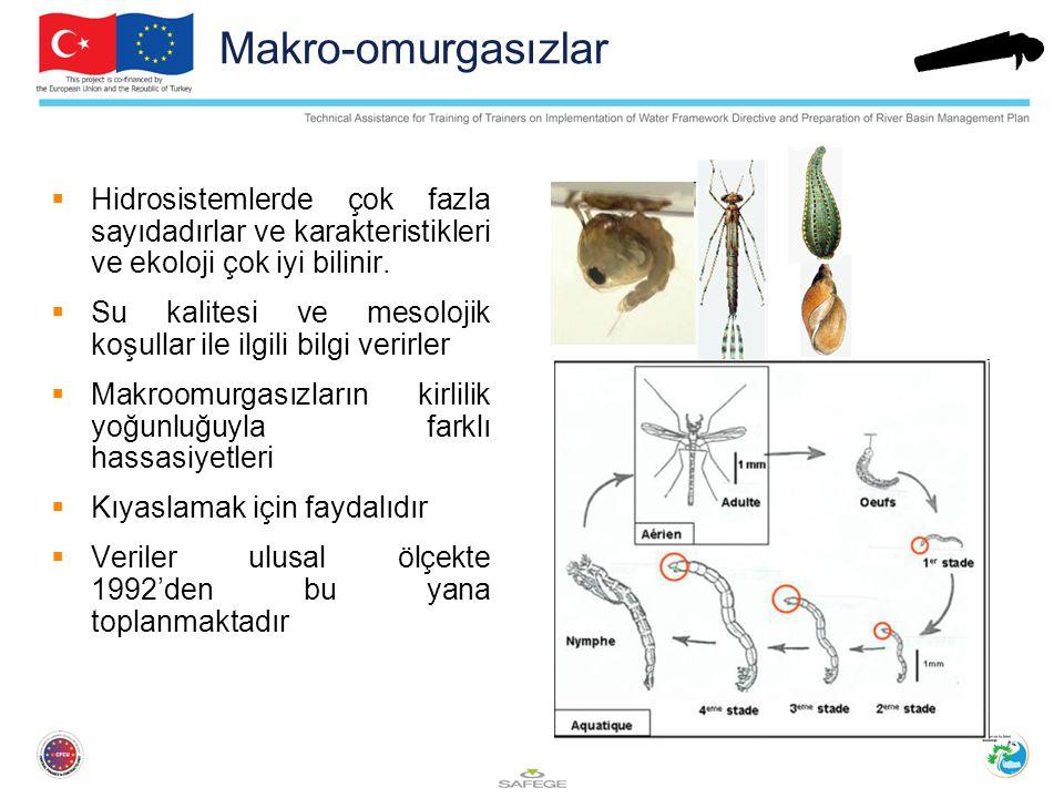 Makro-omurgasızlar Hidrosistemlerde çok fazla sayıdadırlar ve karakteristikleri ve ekoloji çok iyi bilinir.