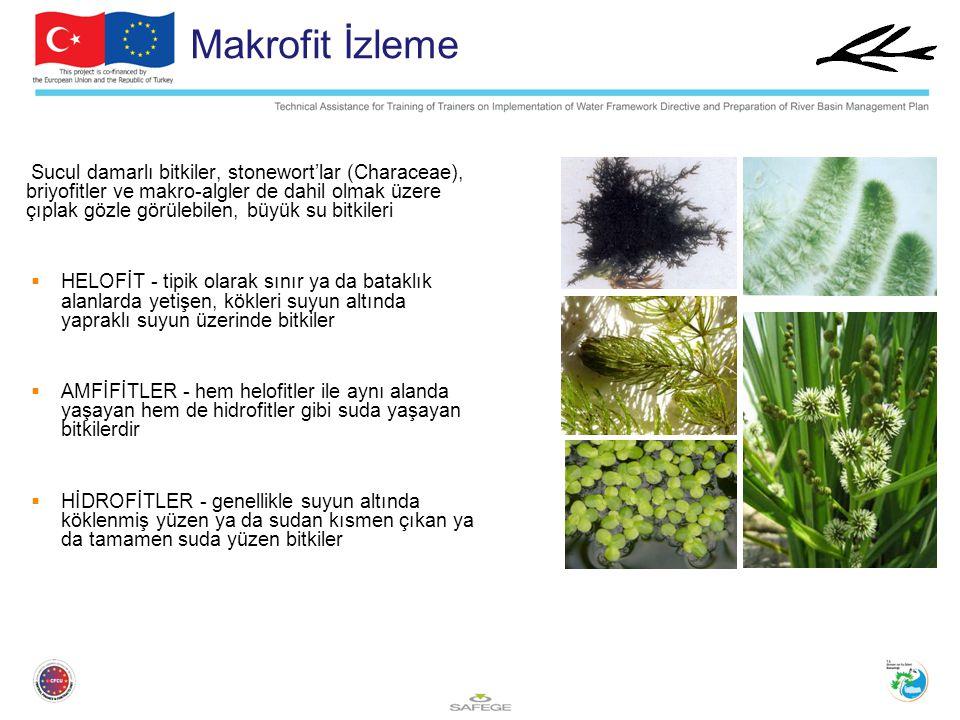 Makrofit İzleme