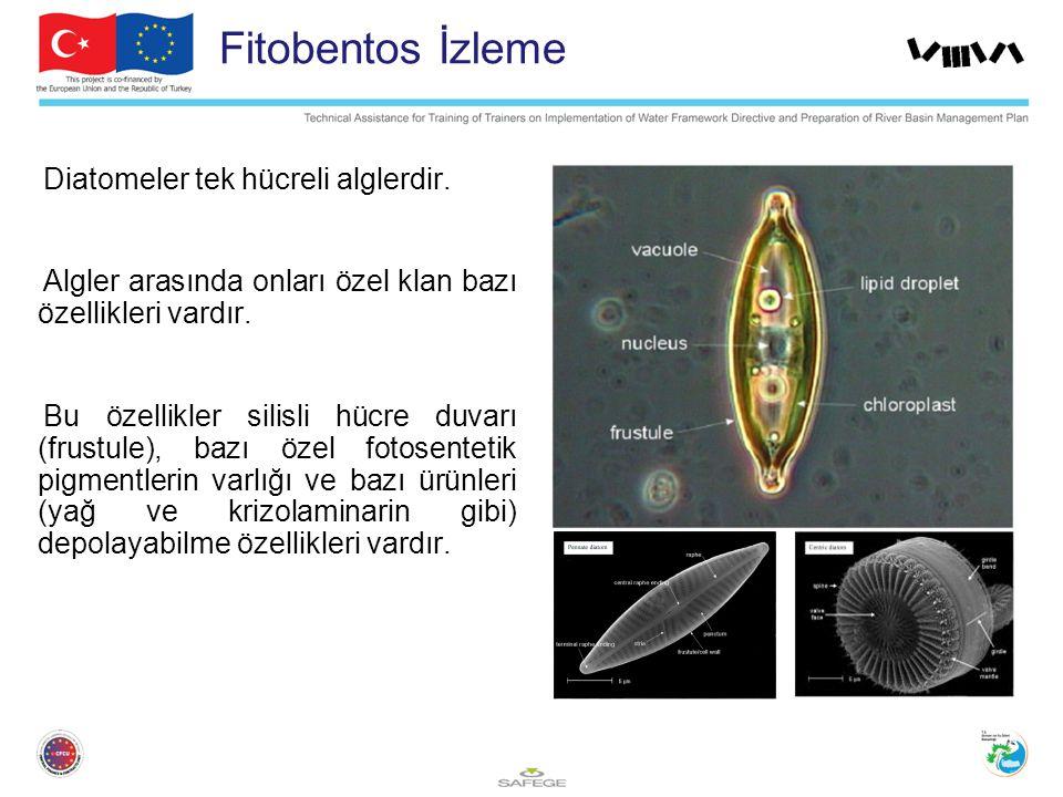 Fitobentos İzleme Diatomeler tek hücreli alglerdir.