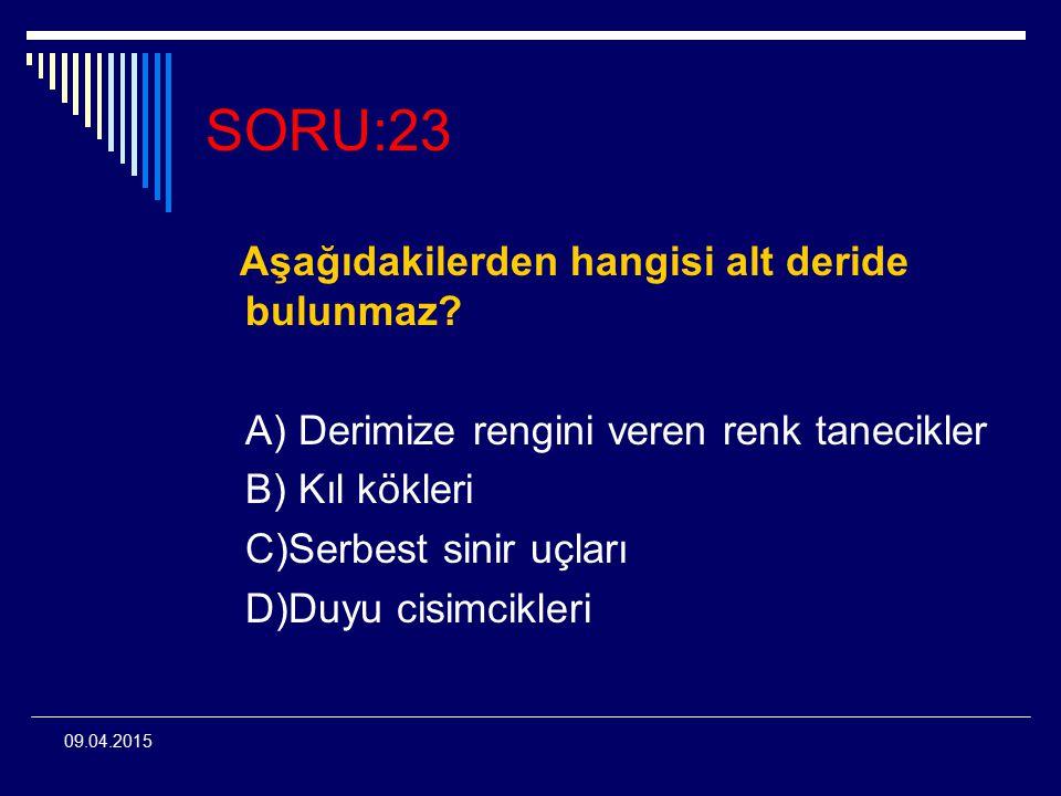 SORU:23 Aşağıdakilerden hangisi alt deride bulunmaz