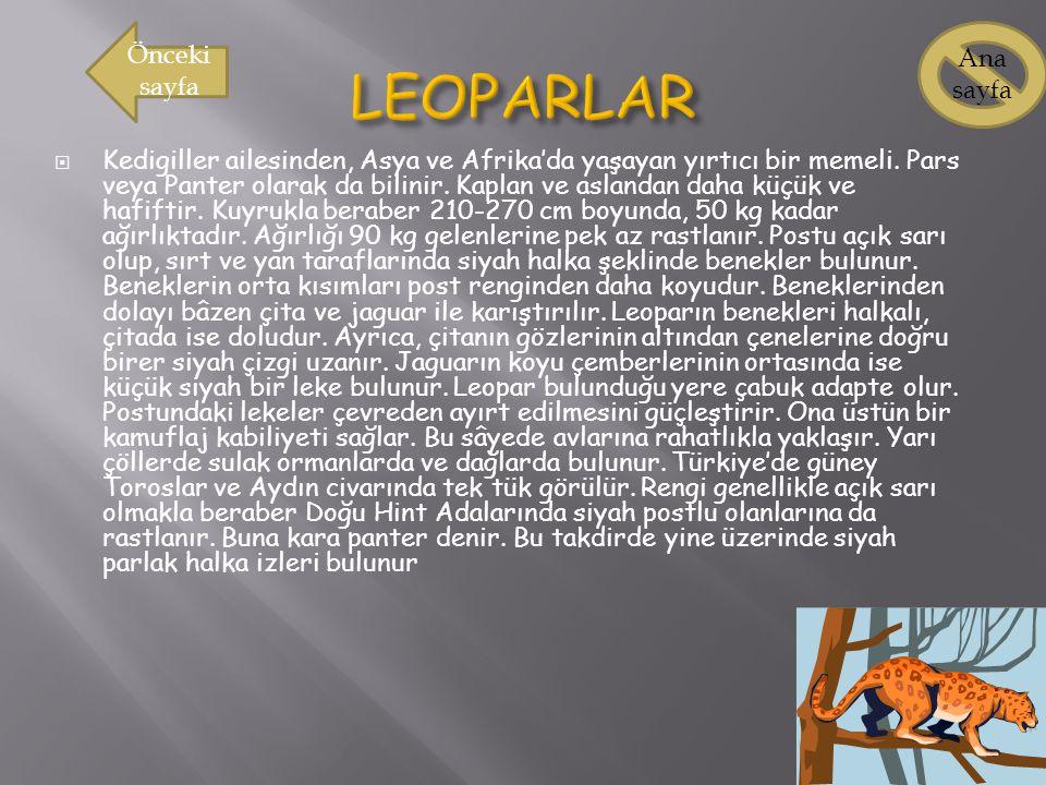 LEOPARLAR Önceki sayfa Ana sayfa