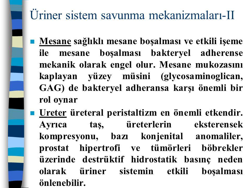 Üriner sistem savunma mekanizmaları-II