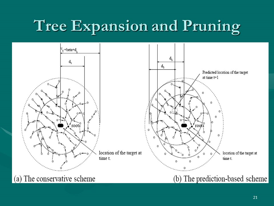 Tree Expansion and Pruning