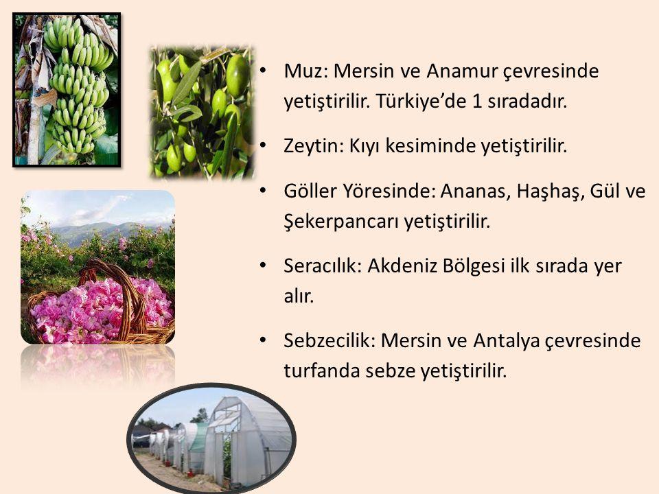 Muz: Mersin ve Anamur çevresinde yetiştirilir. Türkiye'de 1 sıradadır.